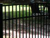 Raleigh Fences Black Aluminum, Wrought Iron Fence with Chain Link Fencing